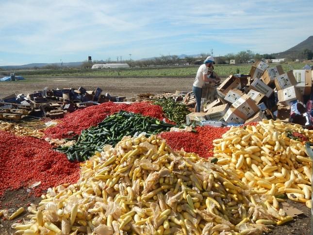 Food-Piles